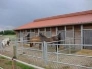 1 Pferdeboxe mit