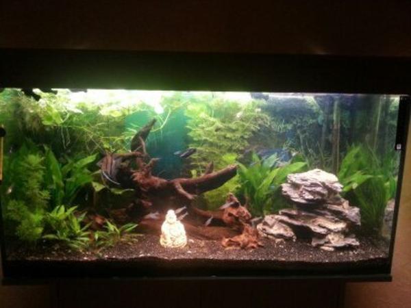 aquarium 100x40x50  neu und gebraucht kaufen bei dhd24com