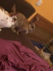 2 Kaninchendamen