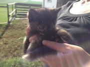 2 kleine Kätzchen