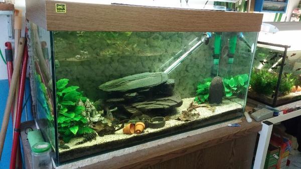 200l aquarium ma e 100x50x40 cm bxhxt in oberderdingen. Black Bedroom Furniture Sets. Home Design Ideas