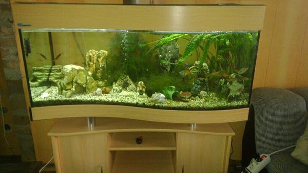 aquarium 260 neu und gebraucht kaufen bei. Black Bedroom Furniture Sets. Home Design Ideas