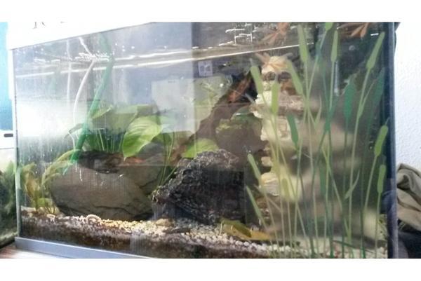 60l aquarium mit guppy zucht au enfilter in nagold. Black Bedroom Furniture Sets. Home Design Ideas