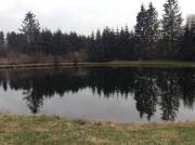 Angelweiher Fischteich