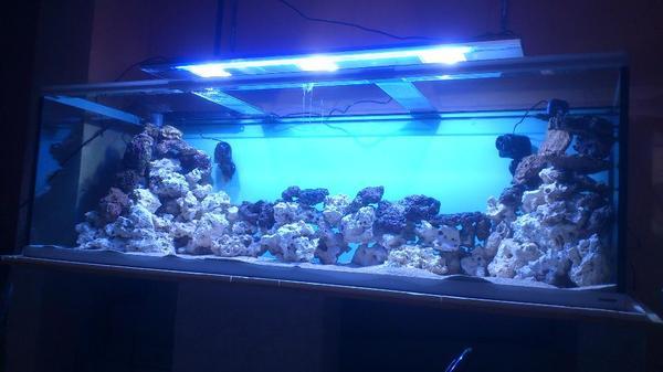 suche aquarium neu und gebraucht kaufen bei. Black Bedroom Furniture Sets. Home Design Ideas