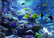 Aquaristik - Seewasser