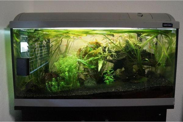aquarium 112 l t8 beleuchtung jbl technik in b hl fische aquaristik kaufen und verkaufen. Black Bedroom Furniture Sets. Home Design Ideas
