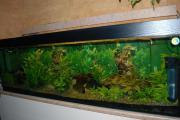 Aquarium 600 Ltr