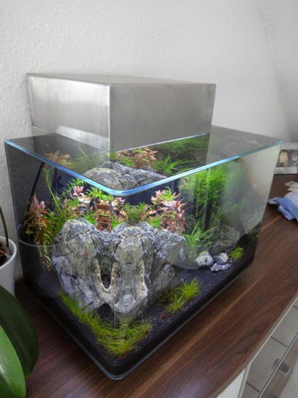 aquarium atb nano square 38l als fluval edge eigenbau mit edelstahl und led beleuchtung zu. Black Bedroom Furniture Sets. Home Design Ideas
