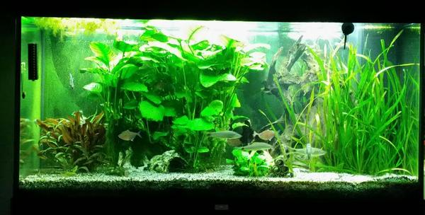 aquarium einrichtung in f rth fische aquaristik kaufen und verkaufen ber private kleinanzeigen. Black Bedroom Furniture Sets. Home Design Ideas