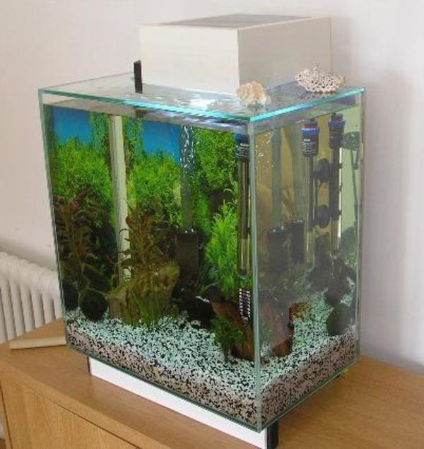 aquarium in seukendorf fische aquaristik kaufen und. Black Bedroom Furniture Sets. Home Design Ideas