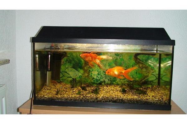 Aquarium 54 neu und gebraucht kaufen bei for Aquarium gebraucht