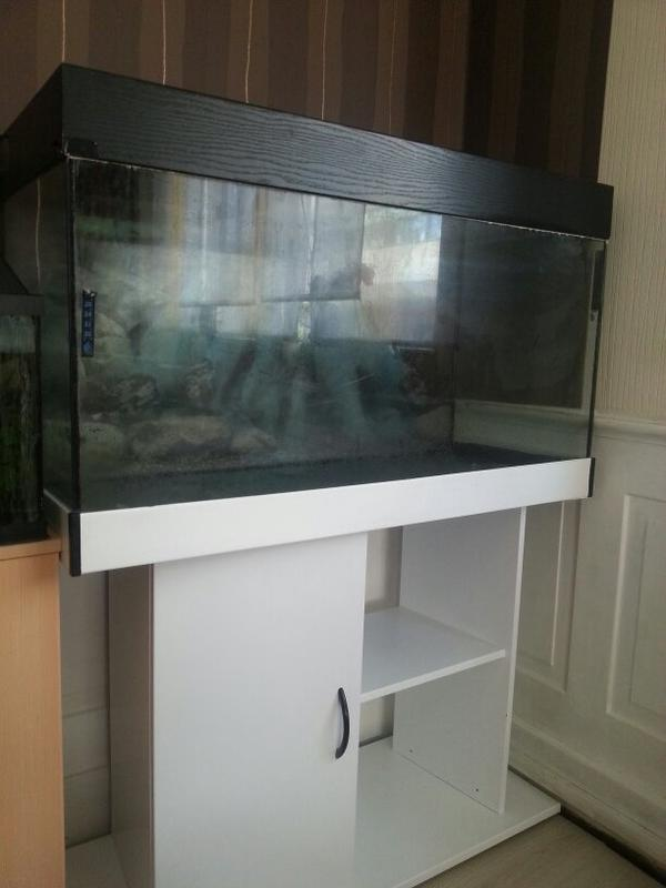 aquarium fische zubeh r in filderstadt kaufen bei. Black Bedroom Furniture Sets. Home Design Ideas
