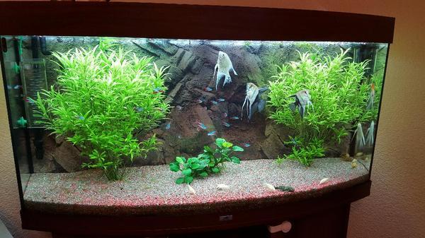 aquarium juwel 260 in bietigheim fische aquaristik. Black Bedroom Furniture Sets. Home Design Ideas