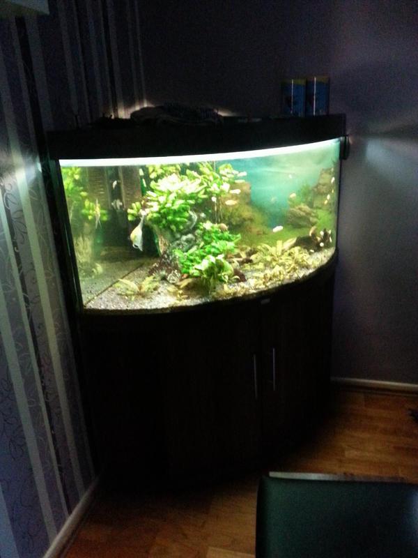 aquarium juwel trigon 350 in essen fische aquaristik. Black Bedroom Furniture Sets. Home Design Ideas