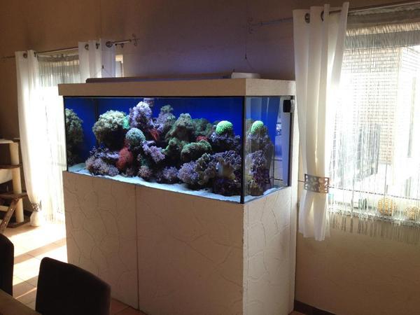 aquarium meerwasser komplett wegen hobbyaufgabe zu. Black Bedroom Furniture Sets. Home Design Ideas