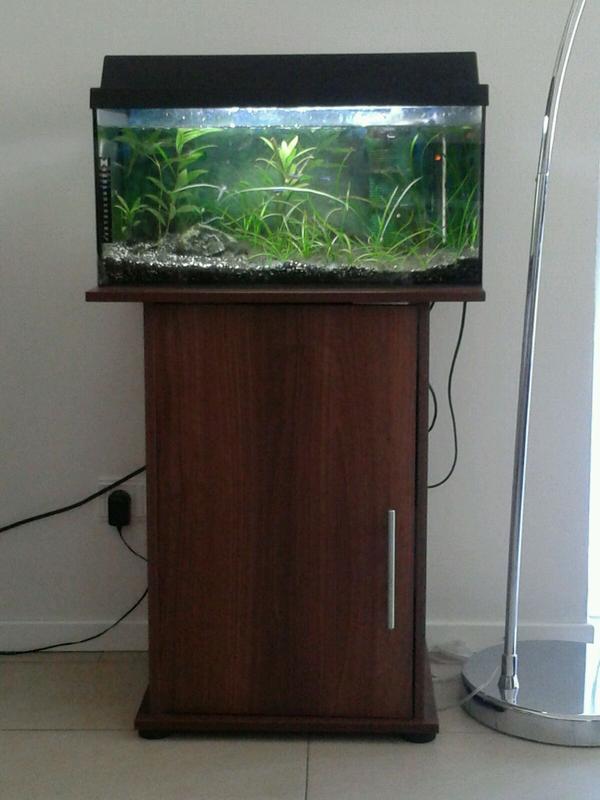 aquarium fische zubeh r in baden baden kaufen bei deine. Black Bedroom Furniture Sets. Home Design Ideas