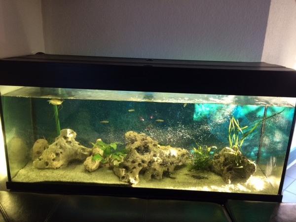 aquarium mit fischen und zubeh r in pforzheim fische aquaristik kaufen und verkaufen ber. Black Bedroom Furniture Sets. Home Design Ideas