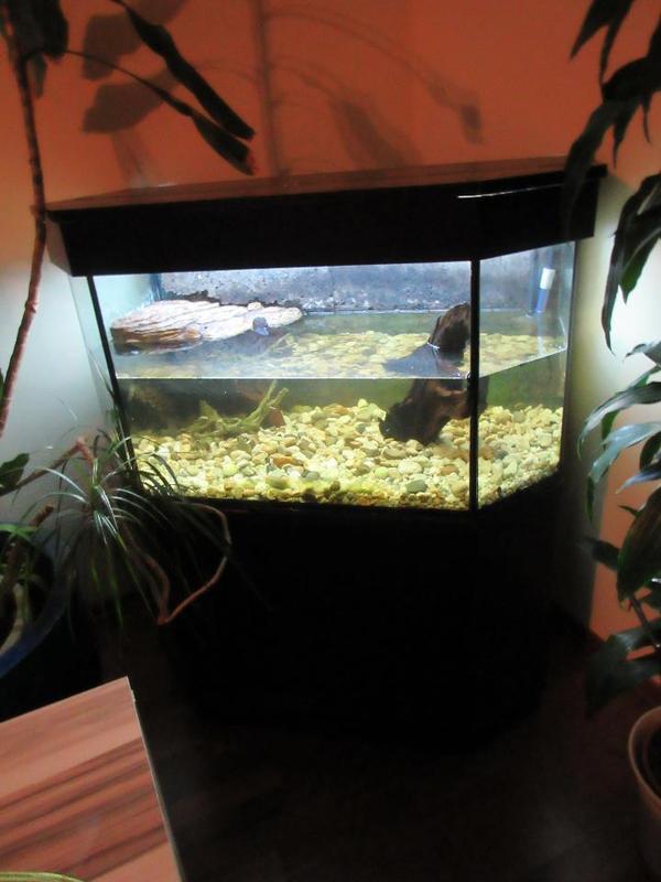 panorama aquarium neu und gebraucht kaufen bei. Black Bedroom Furniture Sets. Home Design Ideas