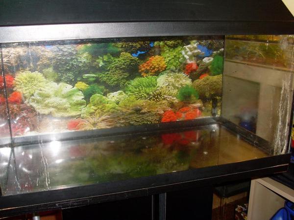 aquarium r ckwand neu und gebraucht kaufen bei. Black Bedroom Furniture Sets. Home Design Ideas