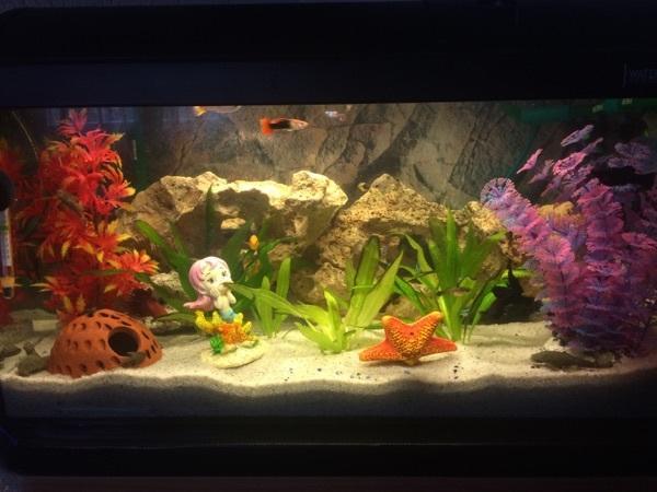 aquarium mit schrank in ludwigshafen fische aquaristik. Black Bedroom Furniture Sets. Home Design Ideas