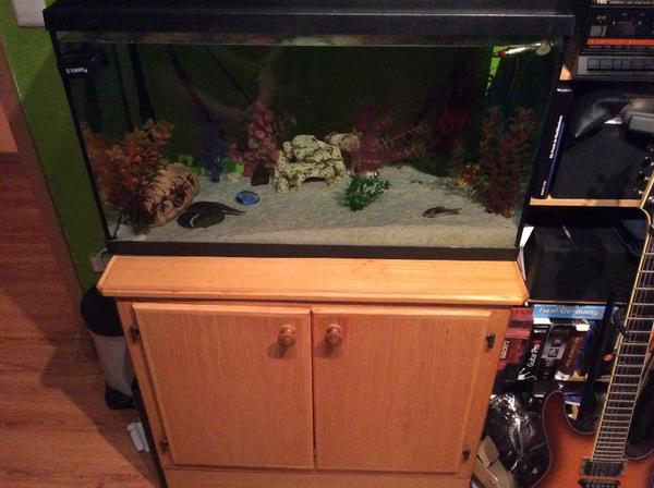 aquarium mit schrank und viel zubeh r in ostfildern. Black Bedroom Furniture Sets. Home Design Ideas