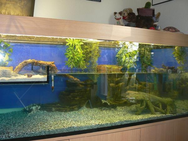 aquarium terrarium f r schildkr ten 160 cm. Black Bedroom Furniture Sets. Home Design Ideas