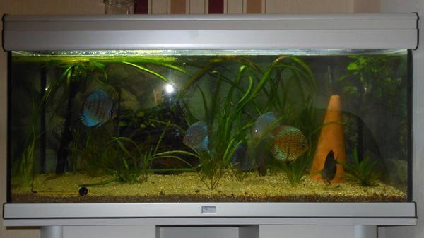 aquarium aquatlantis neu und gebraucht kaufen bei. Black Bedroom Furniture Sets. Home Design Ideas