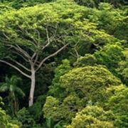 Baumsparverträge abzugeben (vollständig