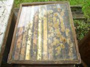 Bienen-jungvolk