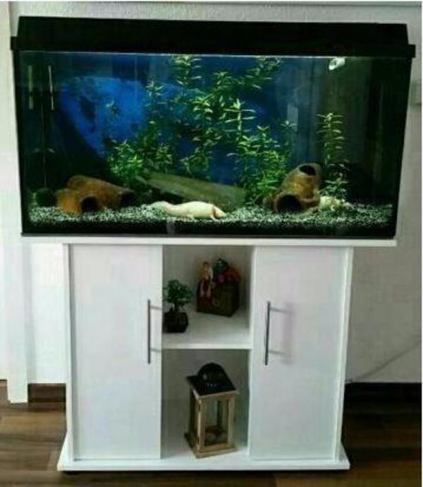 biete aquarium 100x40x50 mit unterschrank juwel rio 180 in bocholt fische aquaristik kaufen. Black Bedroom Furniture Sets. Home Design Ideas