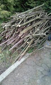 Brennholz / Äste