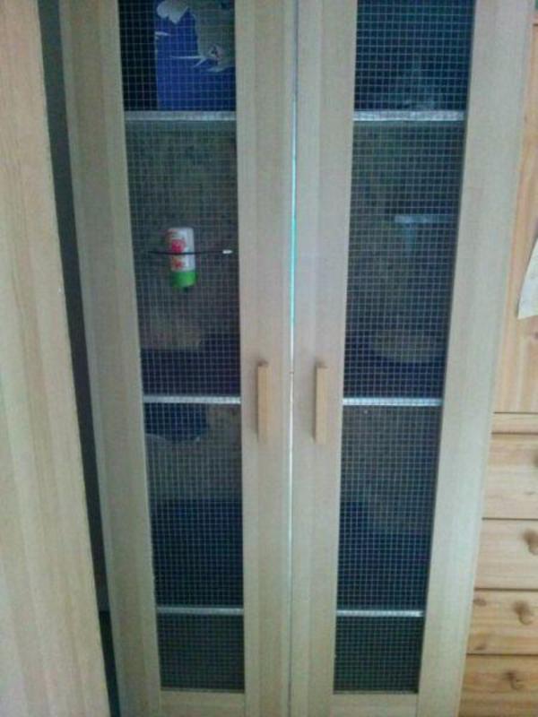 chinchillas k fig in limburgerhof sonstige haustiere. Black Bedroom Furniture Sets. Home Design Ideas