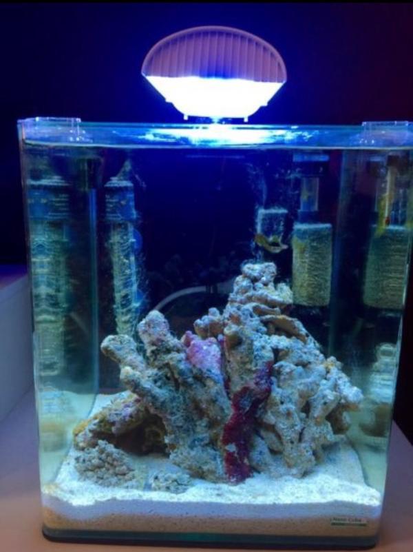 dennerle nano cube 30l marinus salzwasser verkauf oder tausch in weiden fische aquaristik. Black Bedroom Furniture Sets. Home Design Ideas