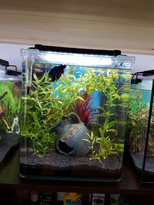 aquarium 30l kaufen gebraucht und g nstig. Black Bedroom Furniture Sets. Home Design Ideas