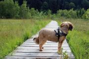 FeWo 4 dogs -