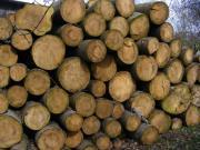 Fichten - Brennholz ungespalten !