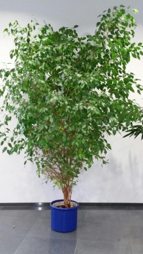 pflanzen b ume str ucher pflanzen garten m nchen gebraucht kaufen. Black Bedroom Furniture Sets. Home Design Ideas