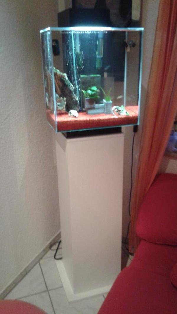 aquarium fische zubeh r in brackenheim kaufen bei deine. Black Bedroom Furniture Sets. Home Design Ideas