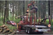 Forstarbeiten, Baum Fällung,