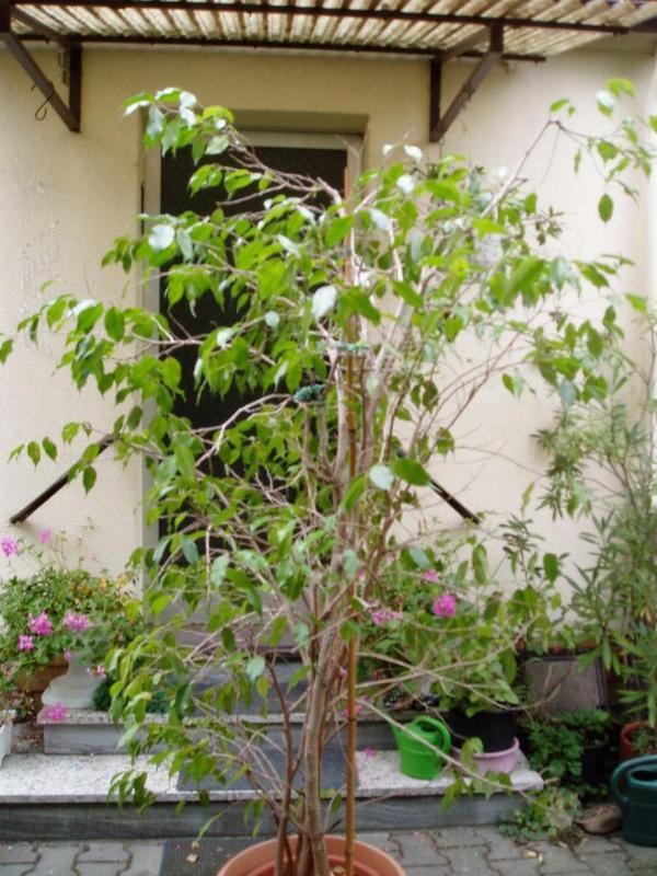 garten und pflanzen in mannheim kaufen und verkaufen ber private kleinanzeigen. Black Bedroom Furniture Sets. Home Design Ideas