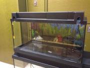 Gebrauchtes Aquarium 60