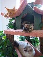 Große Katzenfamilie (11