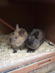 Herzallerliebstes Kaninchenpaar sucht