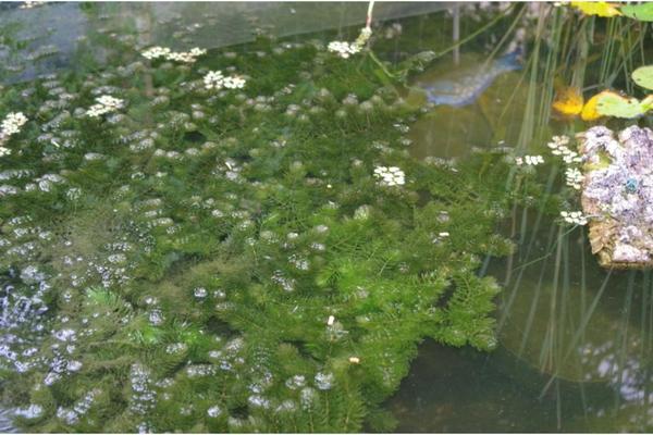 Gartenteich neu und gebraucht kaufen bei for Gartenteich aquarium