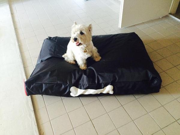 hundebett hundekissen fatboy in deisenhofen zubeh r f r haustiere kaufen und verkaufen ber. Black Bedroom Furniture Sets. Home Design Ideas