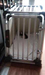 hundebox alu tiermarkt tiere kaufen. Black Bedroom Furniture Sets. Home Design Ideas