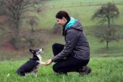 Hundeschule Gemeinsam zum