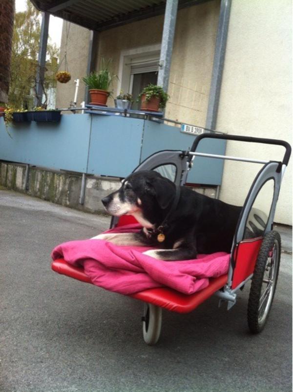 hundewagen schiebbar fuer gr hund in dortmund kaufen. Black Bedroom Furniture Sets. Home Design Ideas