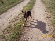 Hundin Bella